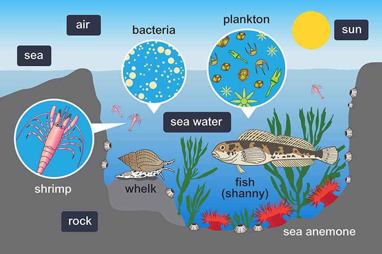 Healthy Ecosystems