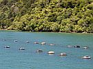 Our Primary Industries Home