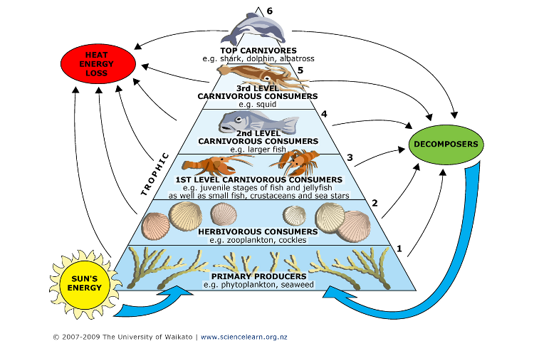 Example Organic Food Organisms in Food Webs Are